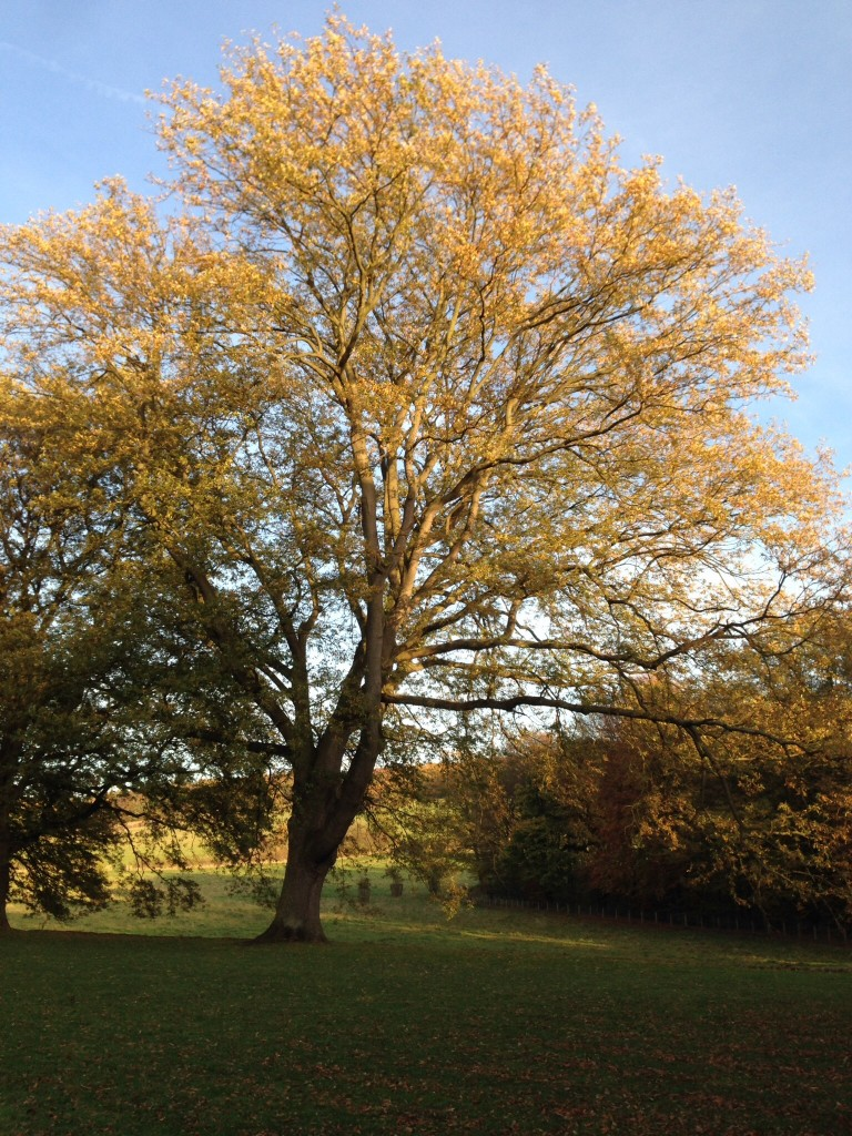 Gibside in the Autumn
