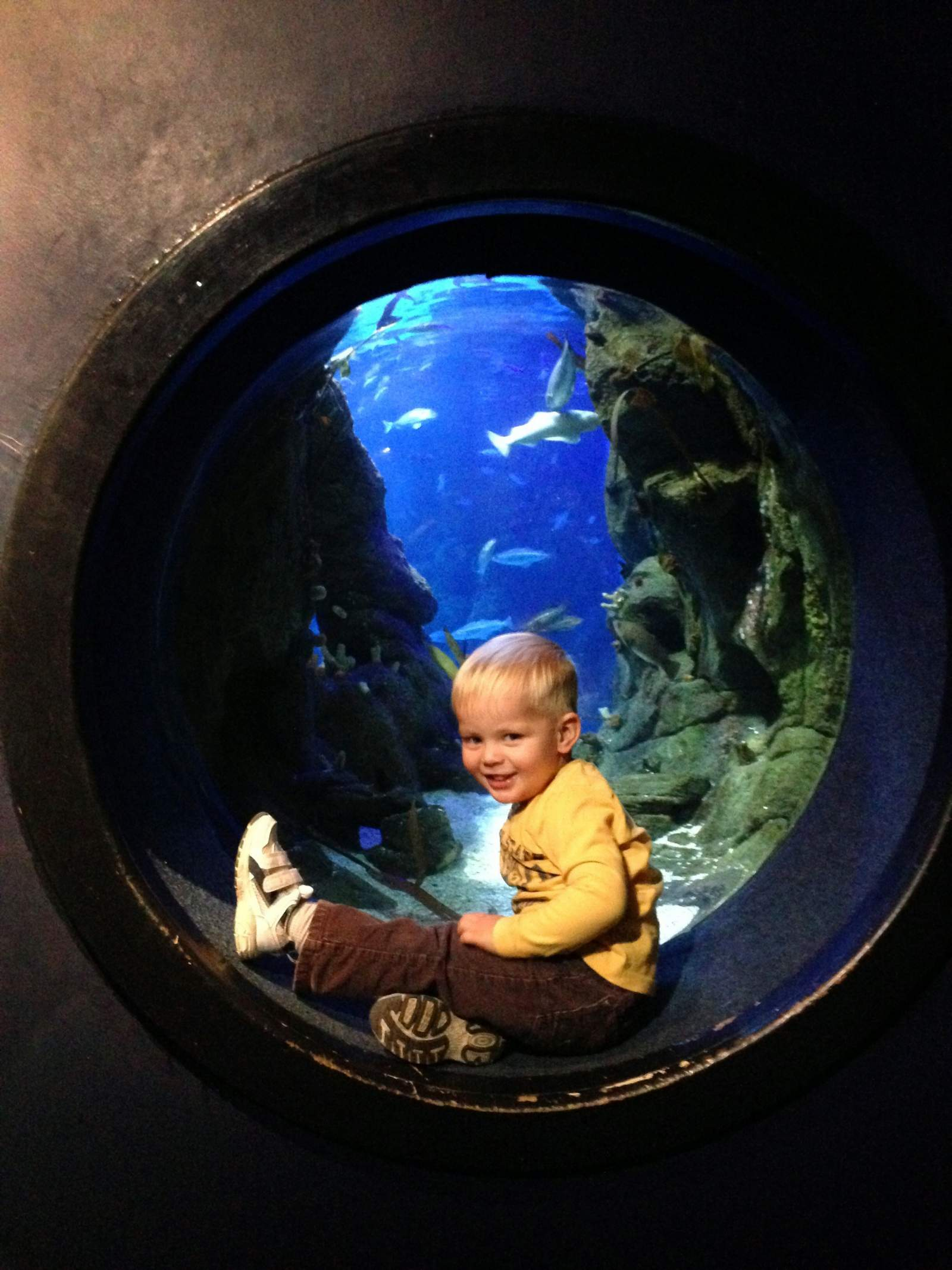 A Day Out With A Toddler in Plymouth and the National Marine Aquarium