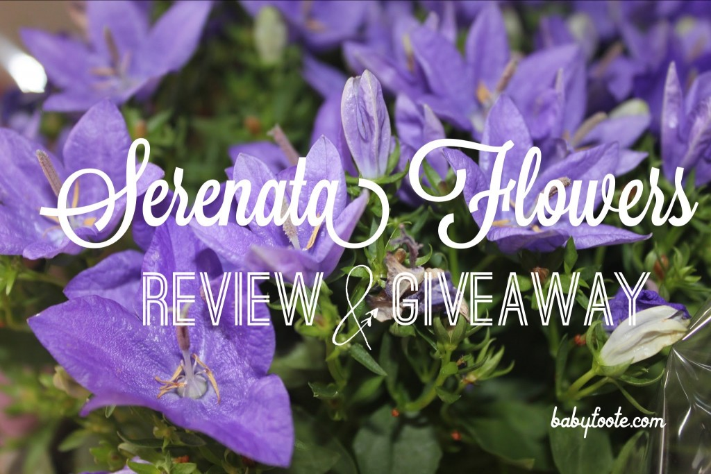 Serenata Flowers – review and giveaway