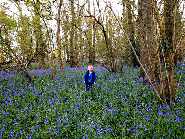 Entertainging Elliot on a day out to visit bluebells