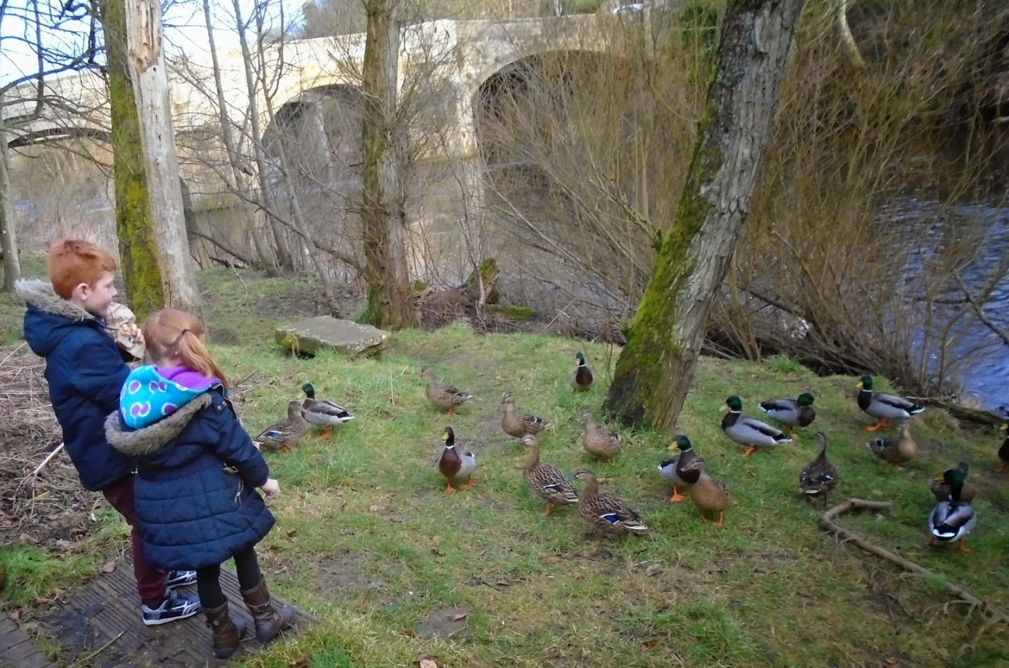 north east family fun at felton feeding the ducks