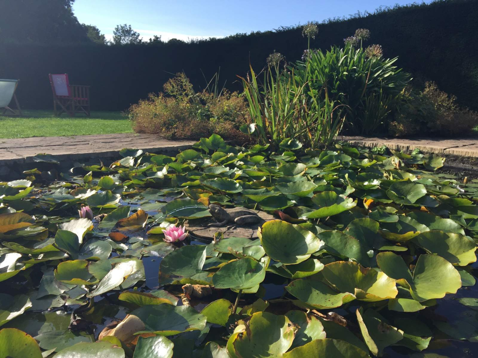 frog pond with lily pads at seaton delaval hall