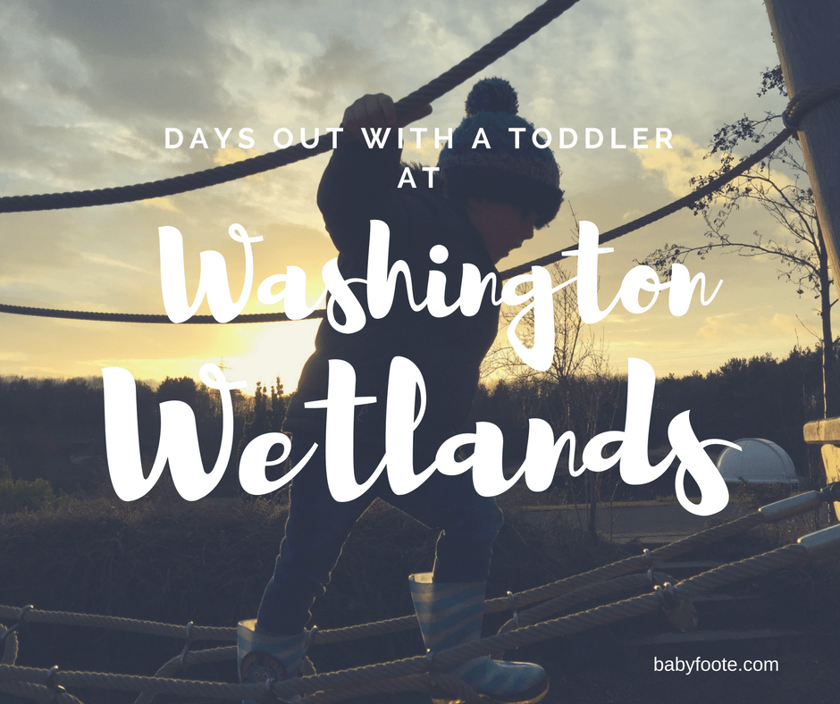 An afternoon at Washington Wetlands Centre