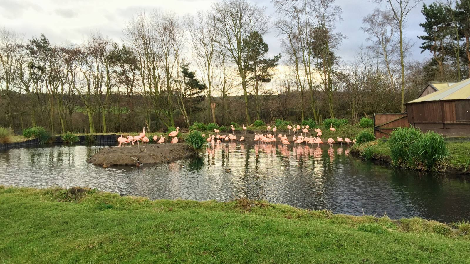 Washington Wetlands has a colony of flamingos