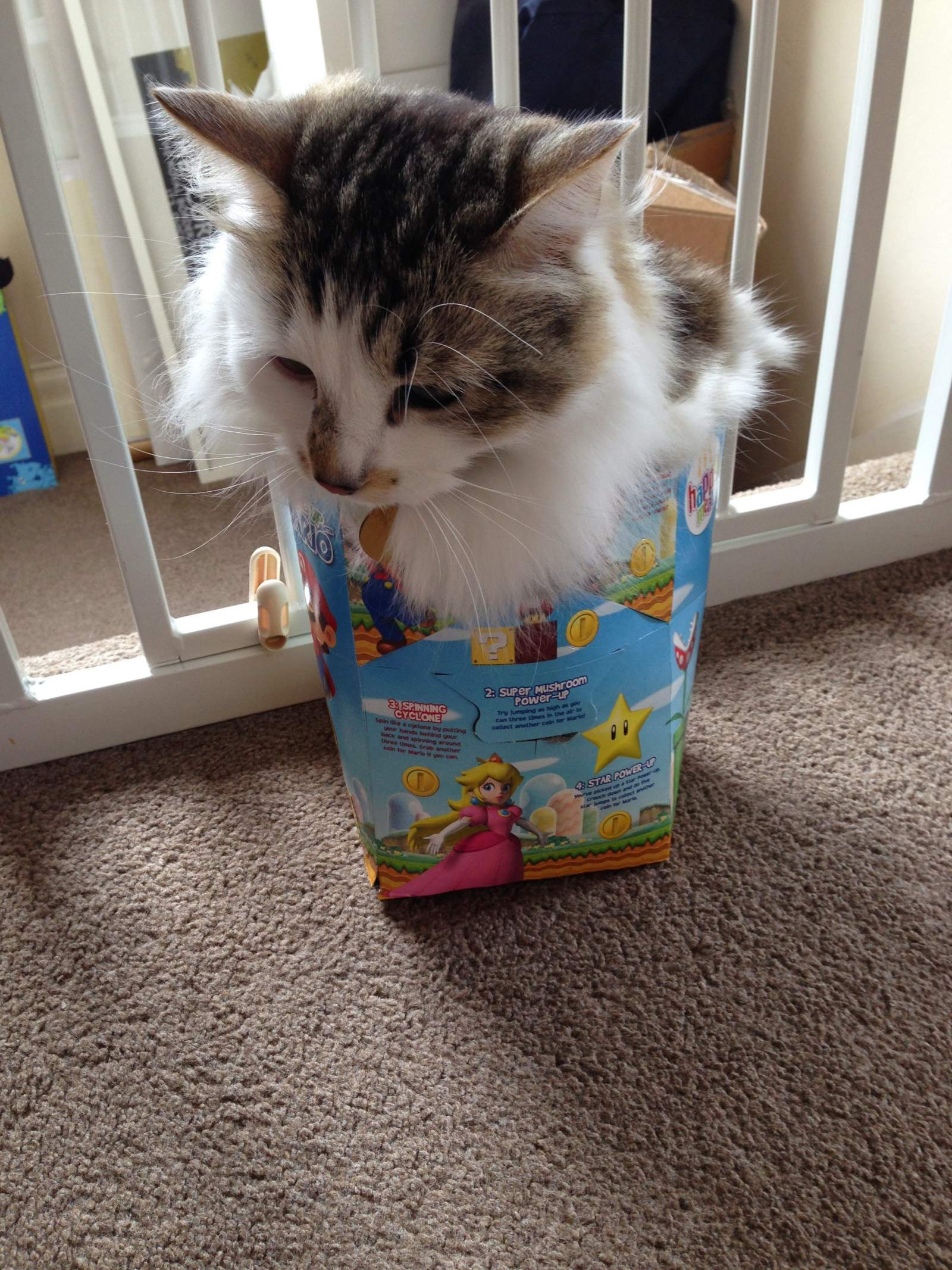 a cat in a happy meal box