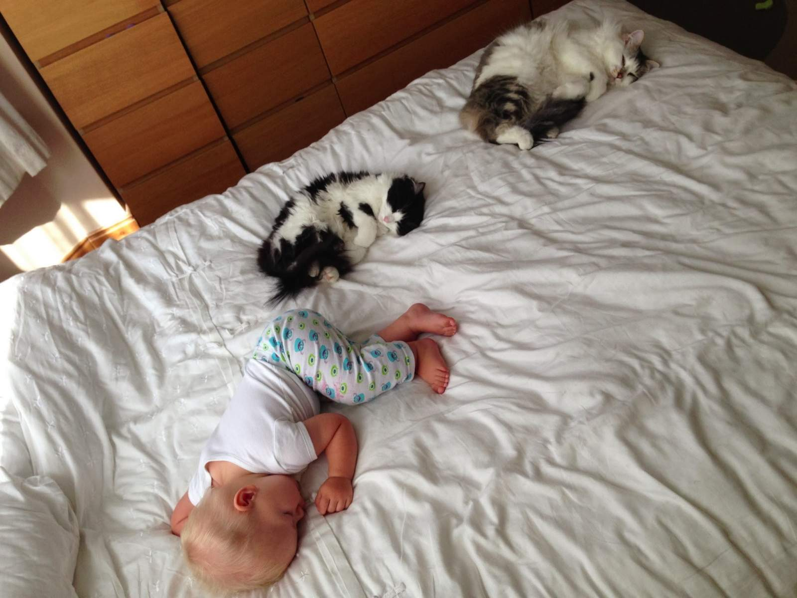 two cats and a toddler on a bed