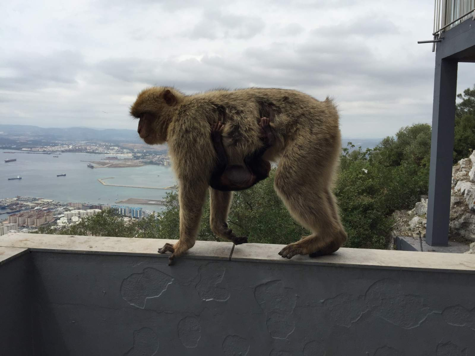 a day out in gibraltar from spain with two young children including a visit to the cable car to see the monkeys