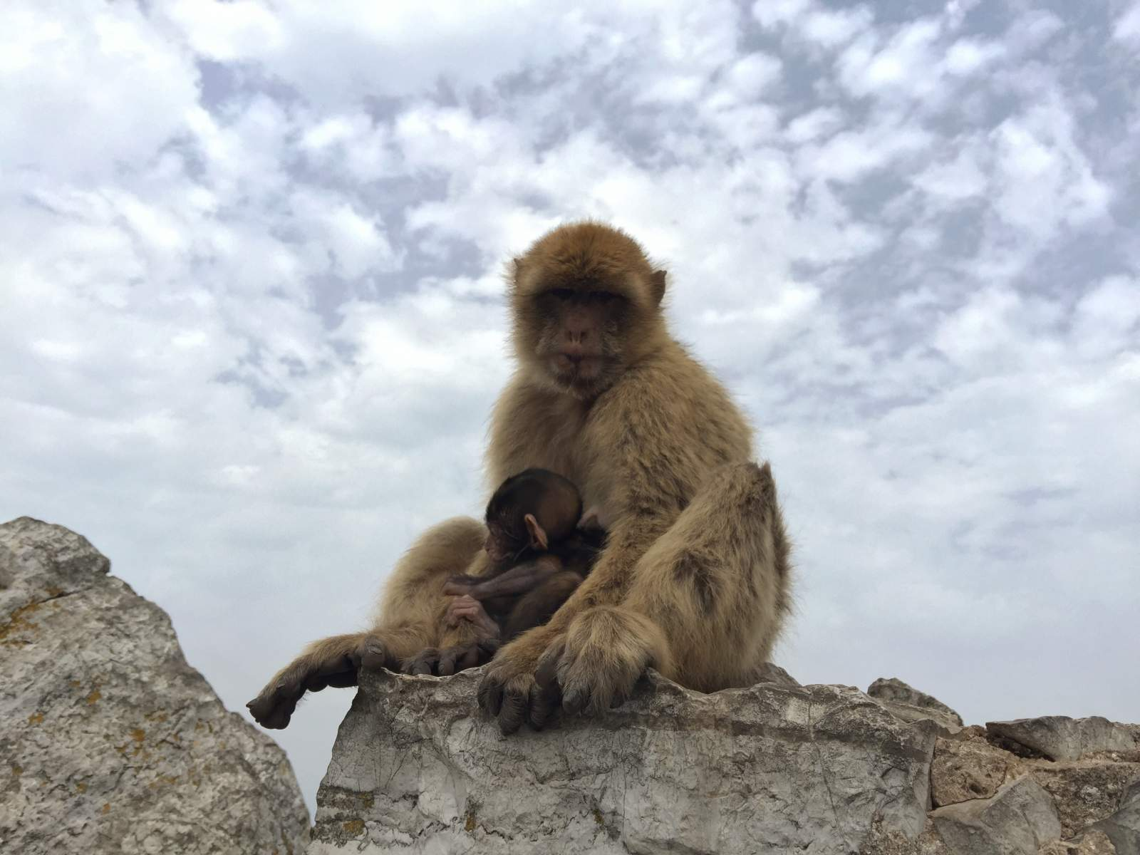 day out with a toddler on gibraltar