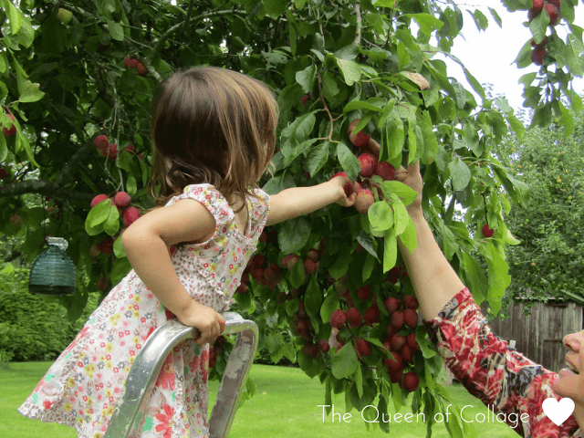 queen of collage picking-plums days out with a toddler september