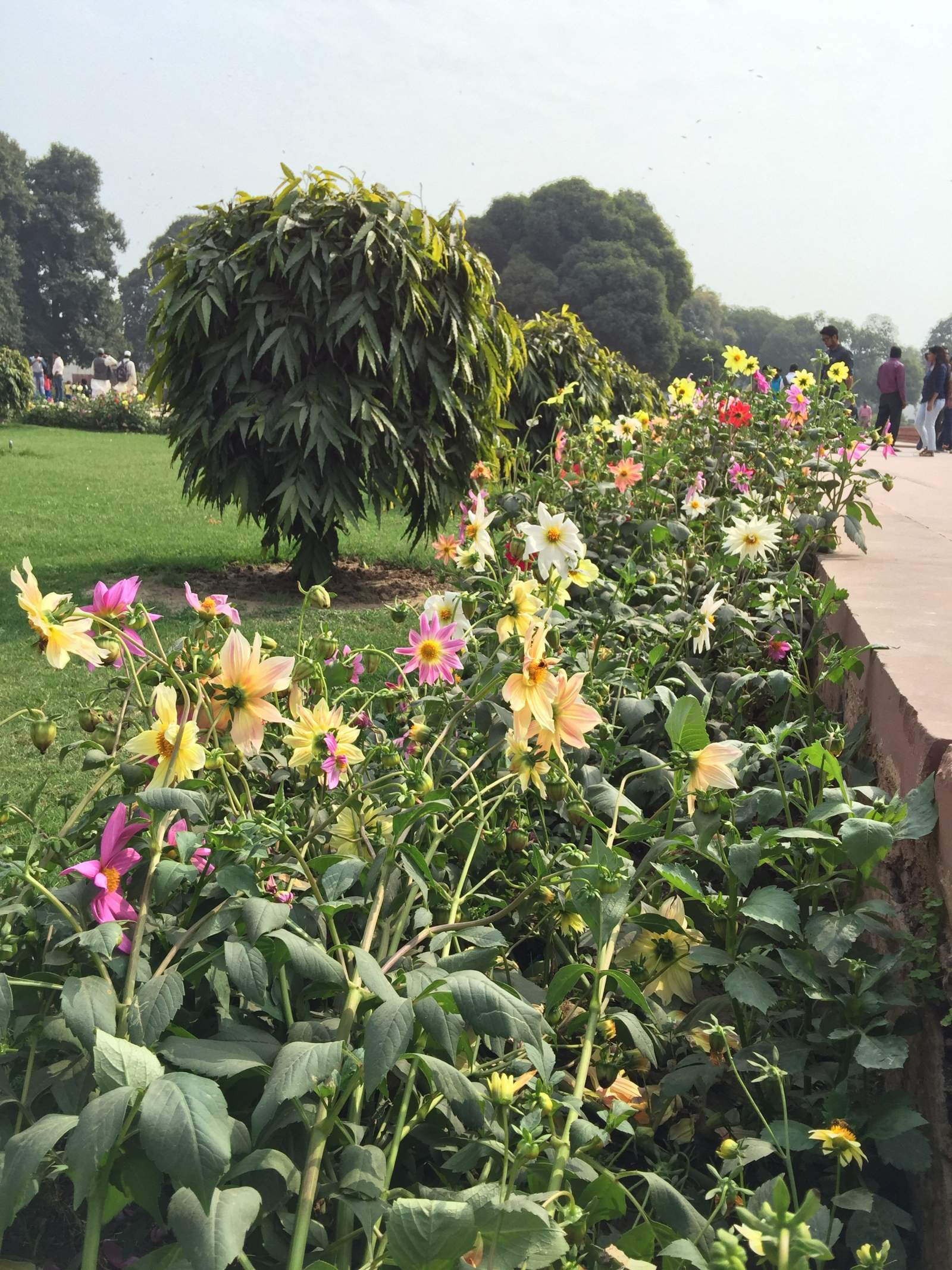 gardens in red fort delhi flowers