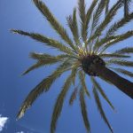 palm trees blue skies and sunshine in benalmadena costa del sol