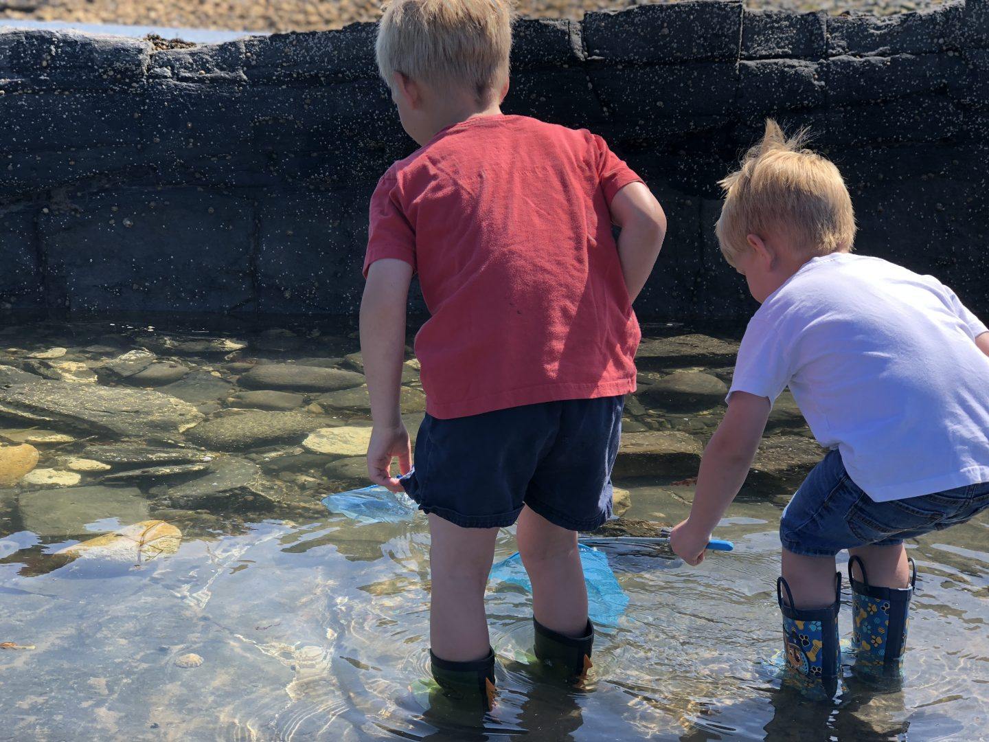two boys rock pooling on a beach