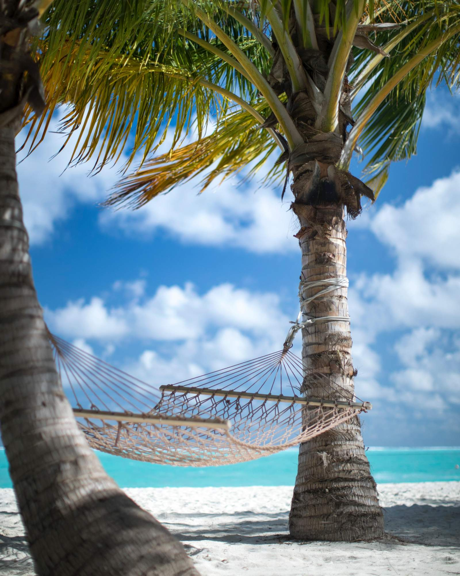 hammock on vacation