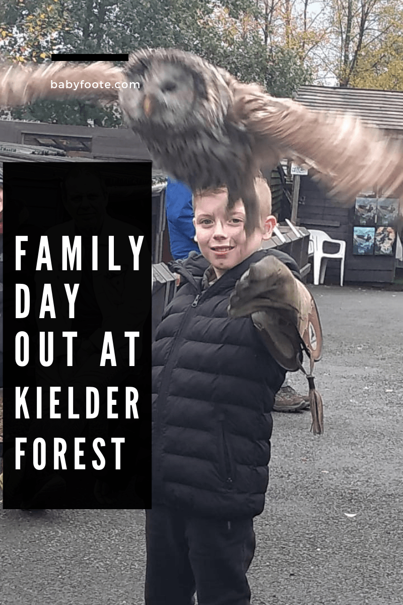 family day out at kielder forest with birds of prey centre