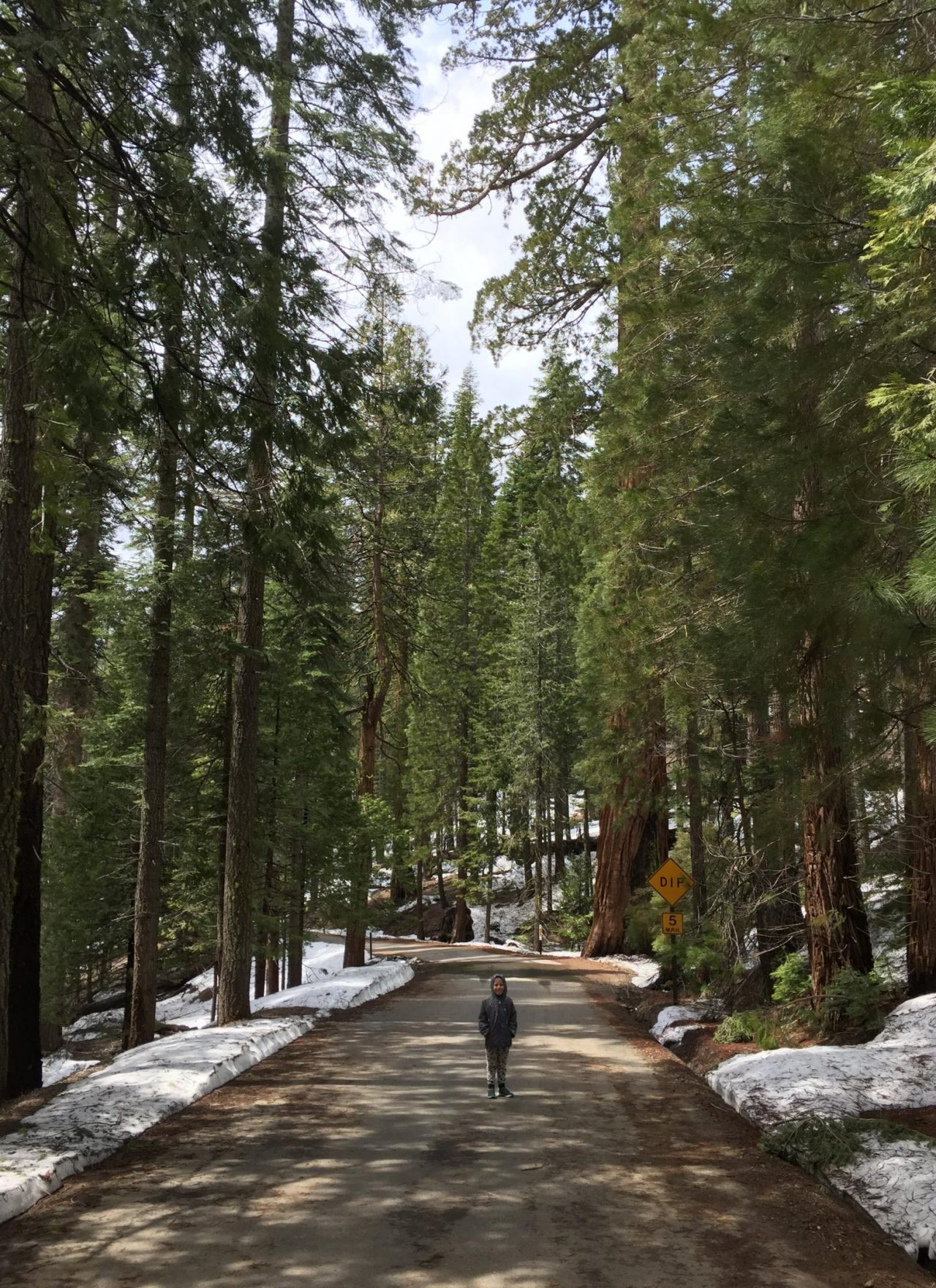 Hiking to Mariposa Grove of Giant Sequoias, with kids, in the snow