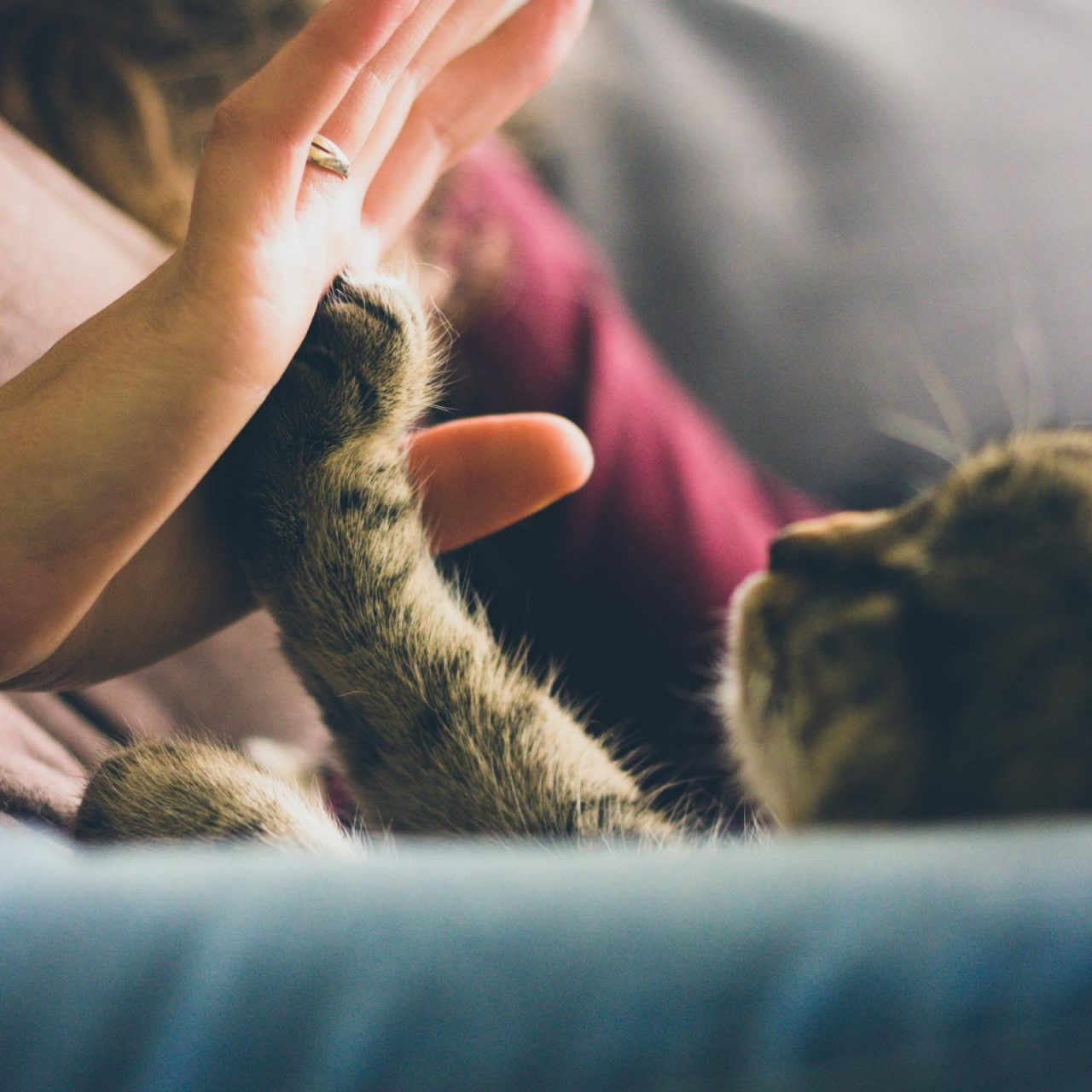 Taking Care of Your Kitties during COVID-19